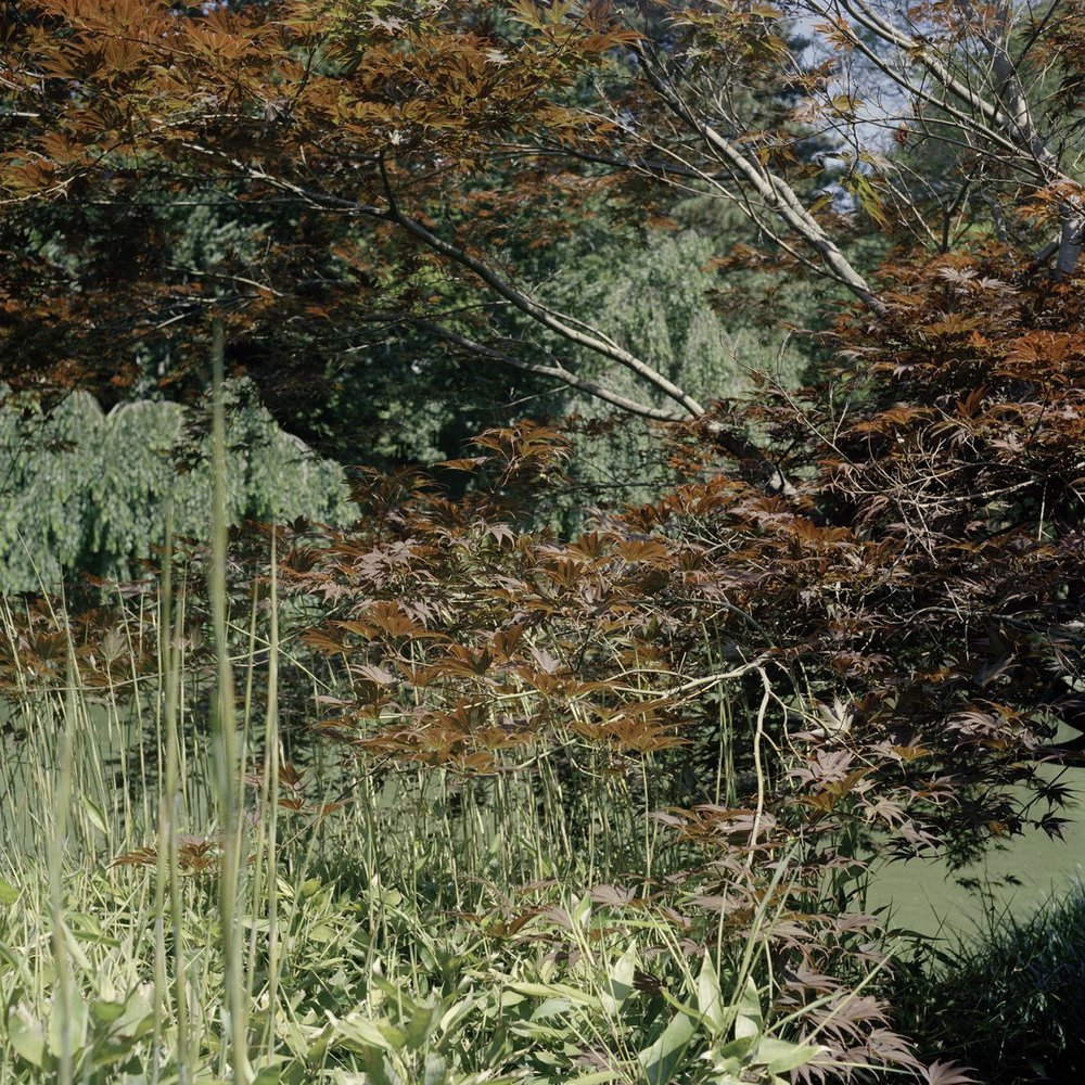 Botanics 5 (Brooklyn Botanical)