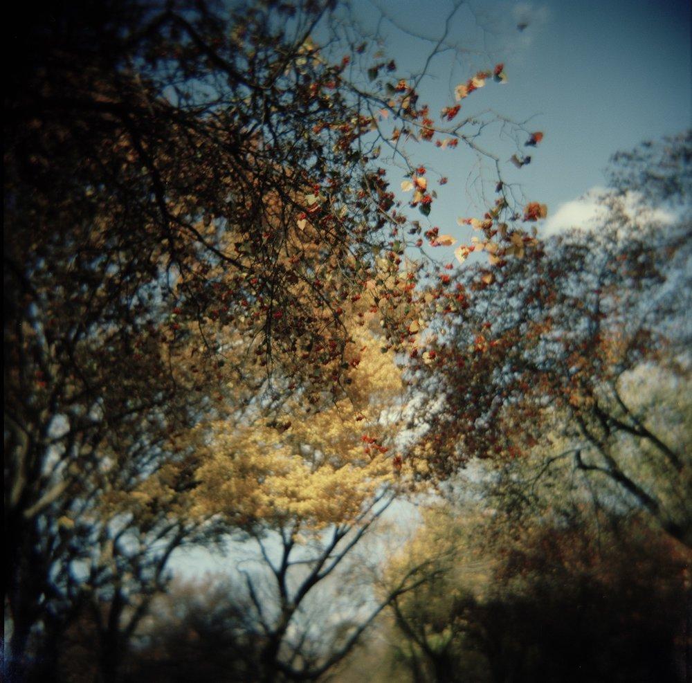 Botanics 6 (Central Park)