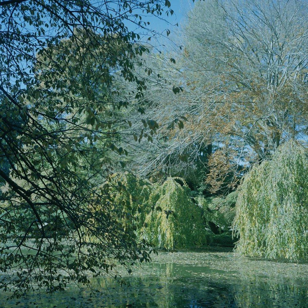 Botanics 13 (Brooklyn Botanical)