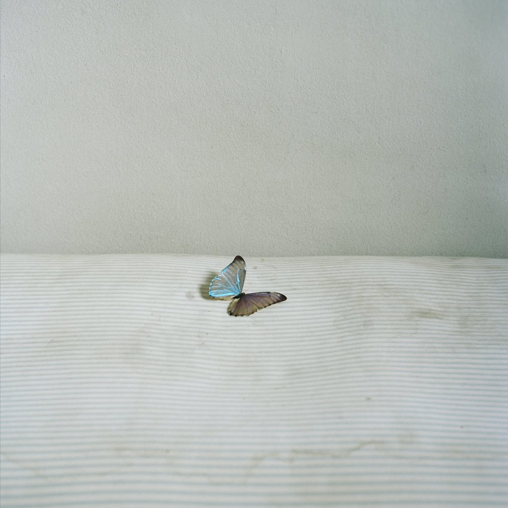 Chaise Longue 6 (Butterfly)