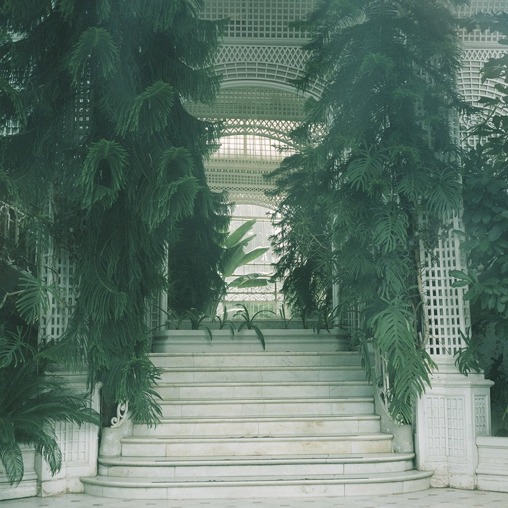 Scattered Dreams (Conservatory)