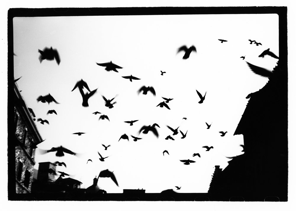 Assiss Birds, 1988