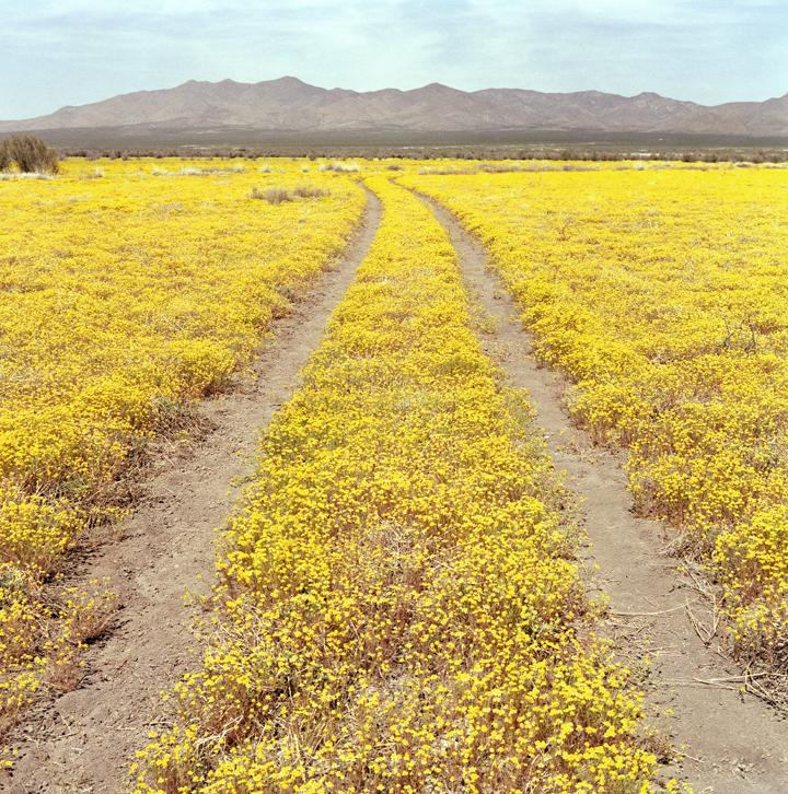 Playas, New Mexico, USA, 2004