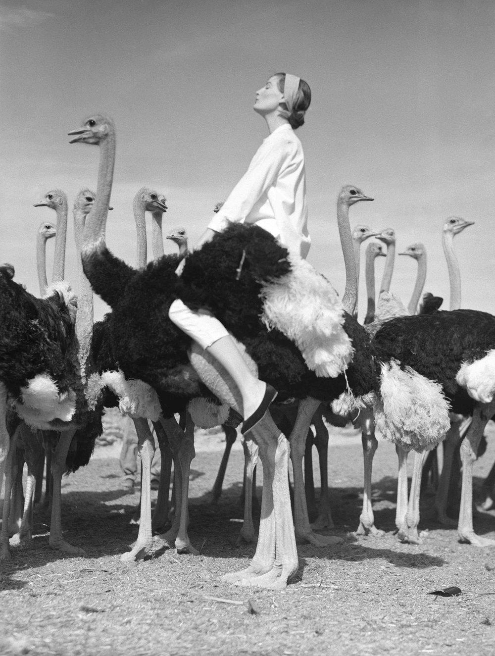 Wenda & Ostriches in South Africa for Vogue Magazine, 1951