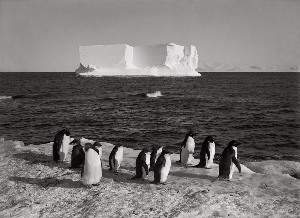 'Penguins & a berg at Cape Royds, February 13th 1911' by Herbert Ponting