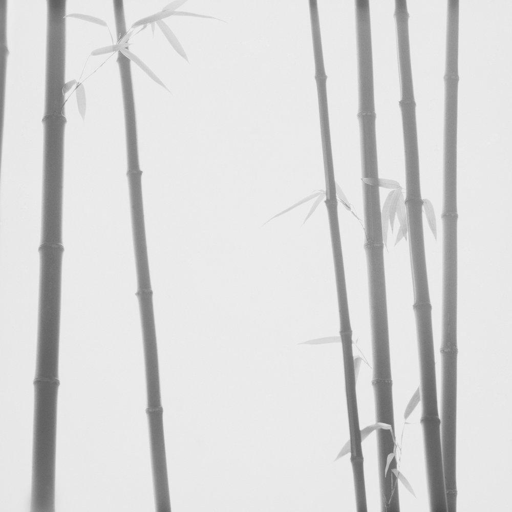 Bamboo Grey 02
