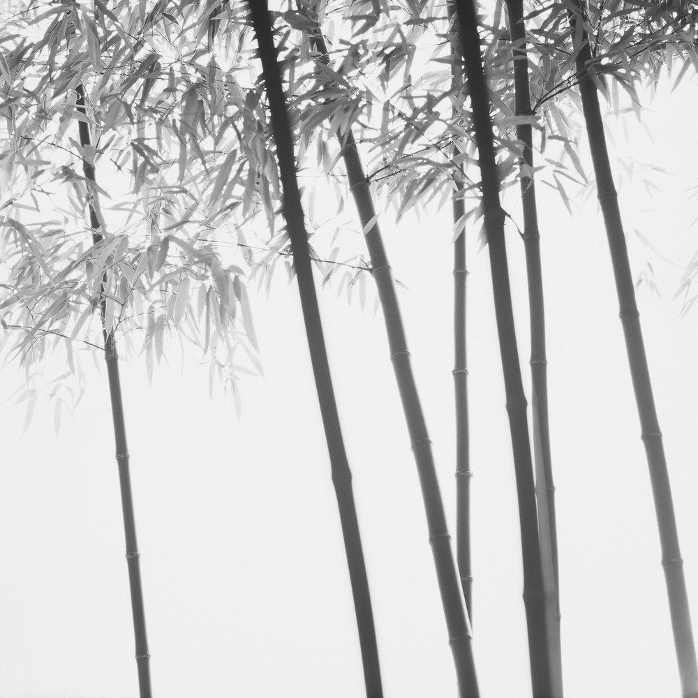 Bamboo Grey 05