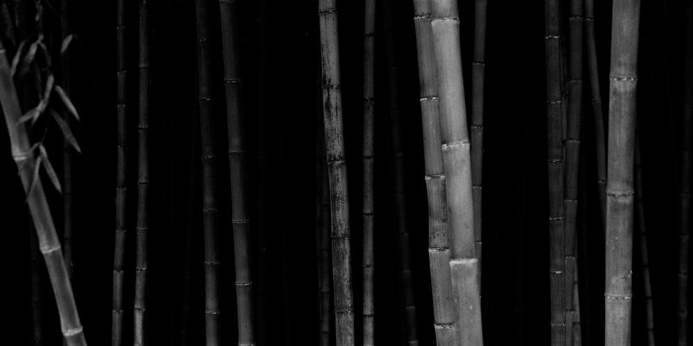 Bamboo Panorama 01