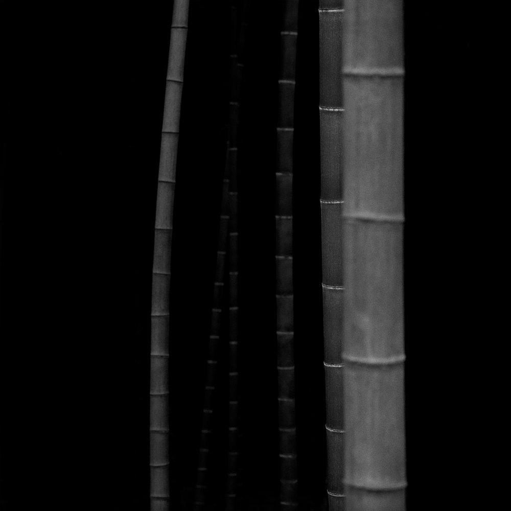 Bamboo Square 06