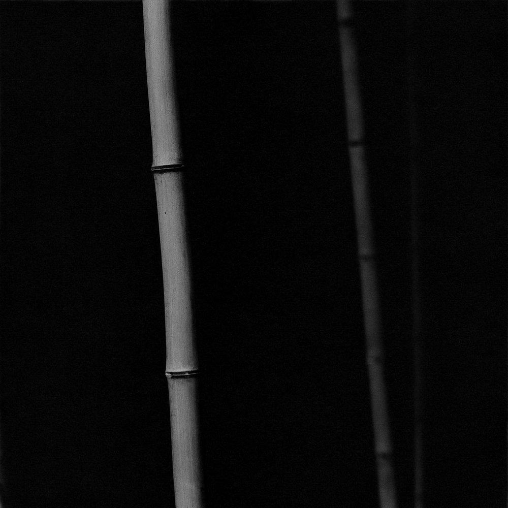 Bamboo Square 09