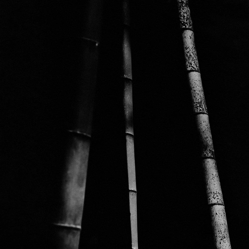 Bamboo Square 15
