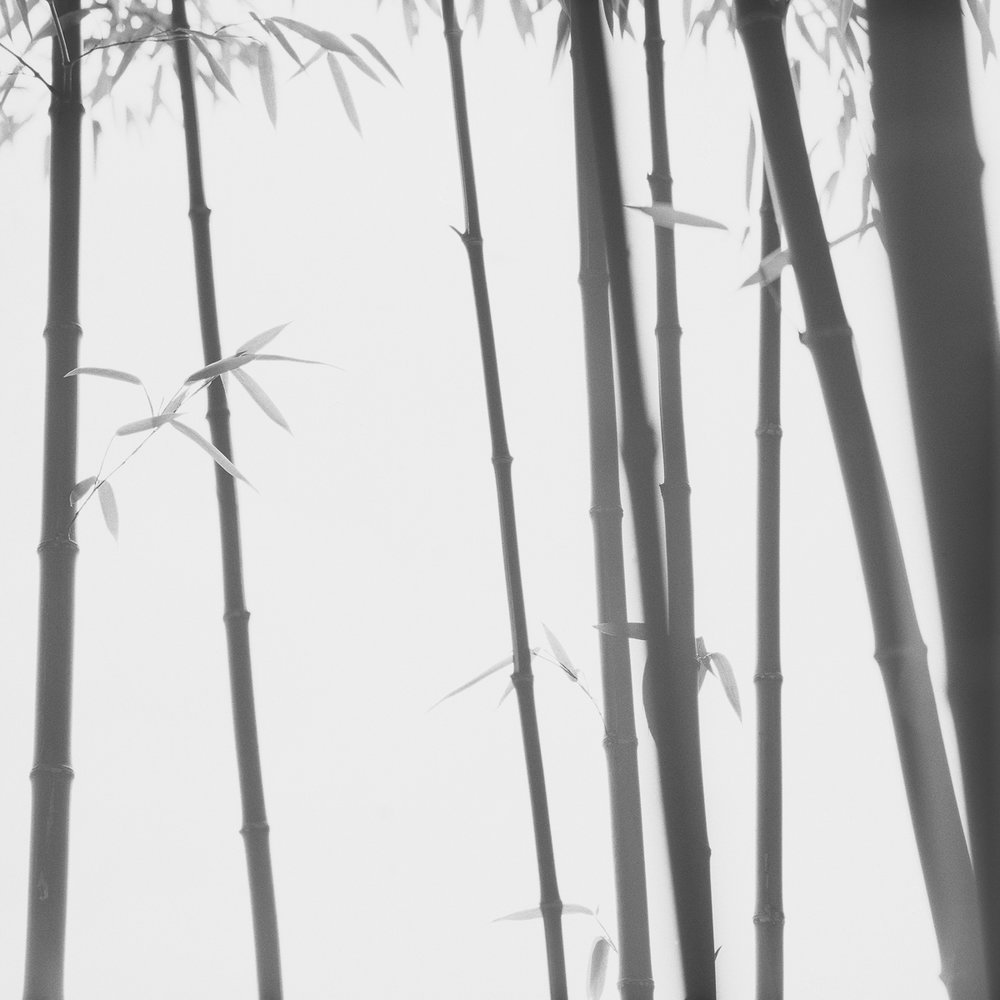 Bamboo Grey 013