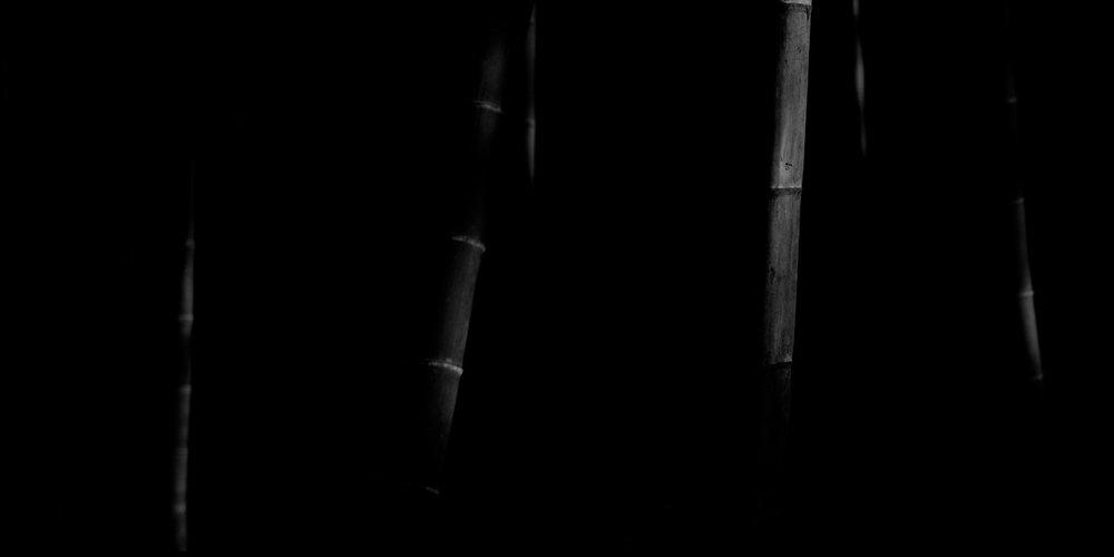 Bamboo Panorama 07
