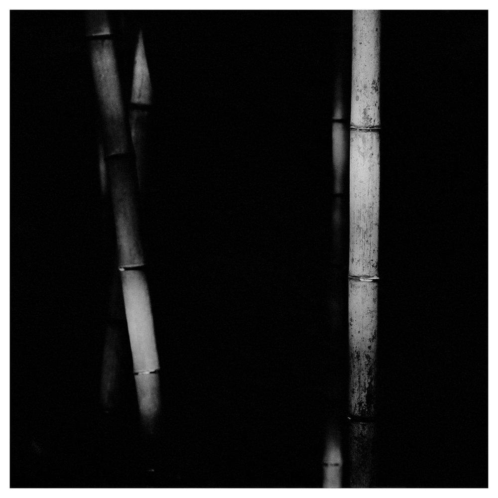Bamboo Square 04