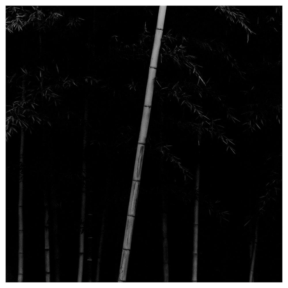 Bamboo Square 12