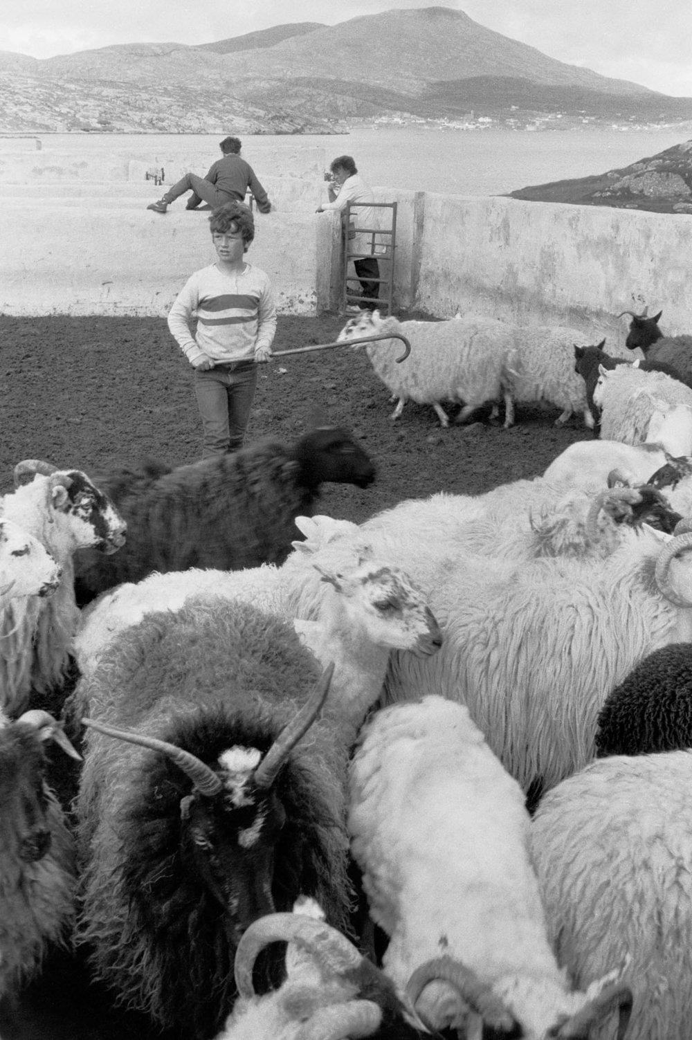 Francis Sinclair sheepshank.jpg