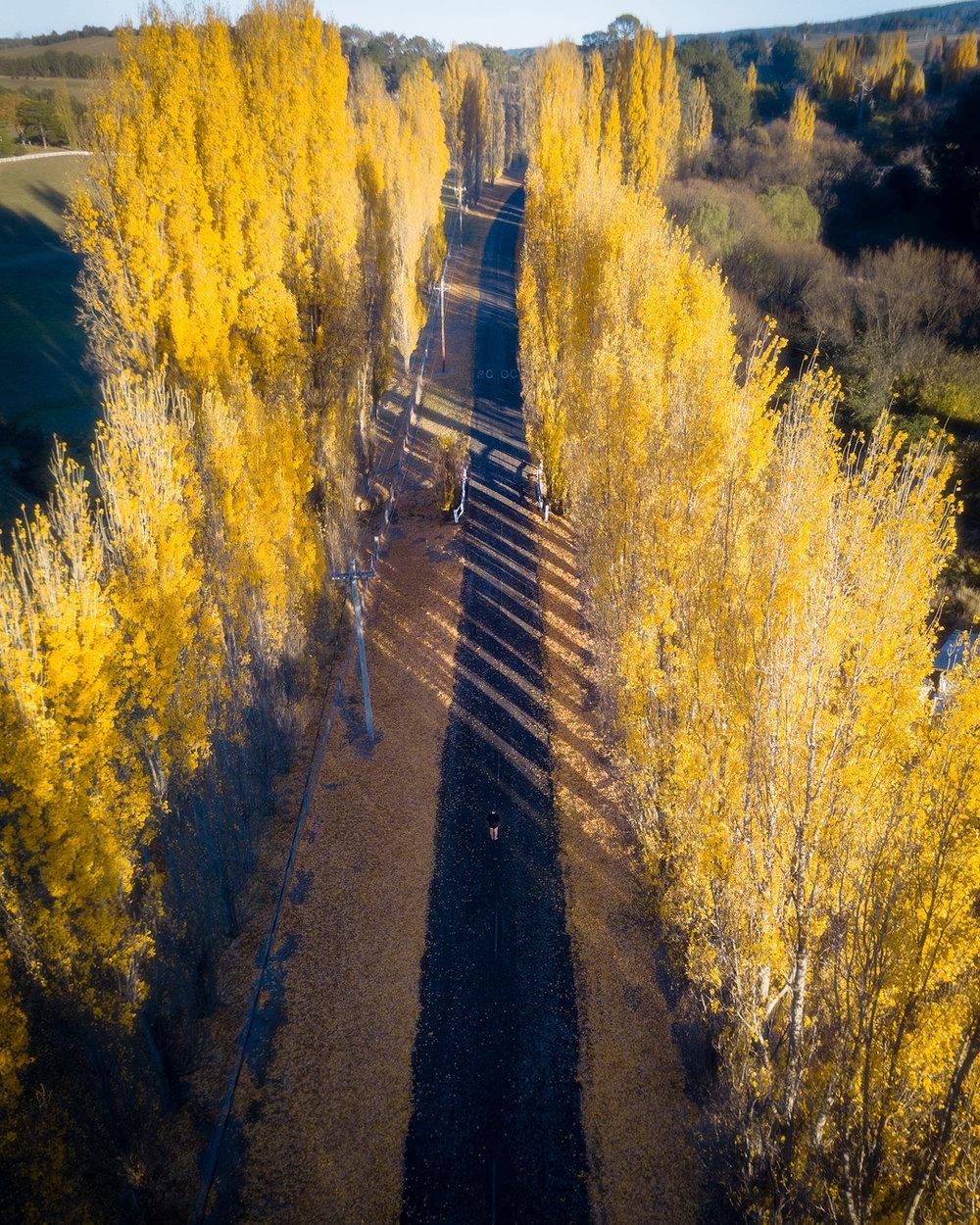 Autumn-Lane.jpg