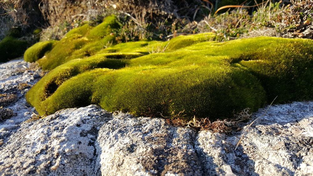 Moss green blanket