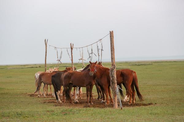 Horse Line.jpg