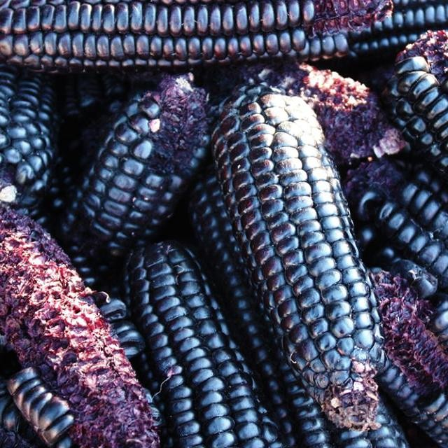 At some point, your Ultra Bites start off life looking a bit like this. Gorgeous blue corn from heritage seeds grown on the side of a volcano in Mexico. No wonder it's packed with anthocyanins and other antioxidants. It's then harvested, toasted and ground into a flour which we use as the base for our yummy bites. @azurefood  #pinole #bluecorn #corn #mexico #startup #business #food #health #challenge #ultramarathon #tarahumara