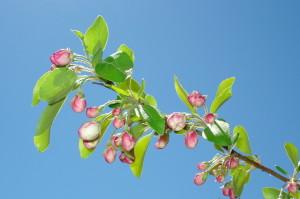 spring-085
