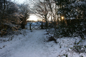 snow-scene-29941281366149rSLC