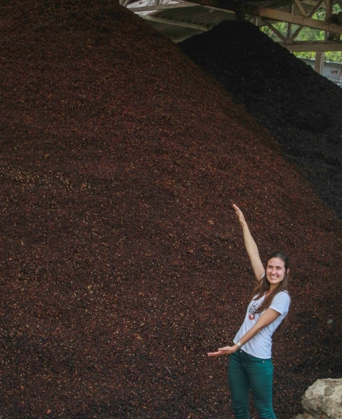 There are millions of tons of coffee cherries waiting to be turned into Lazy Bear Tea. Let's put them to use!