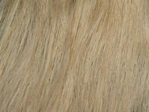 Golden Blonde #18