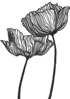 52203a209f24df5e5f9afa8d1faf3171--poppy-line-drawing-flower-ink-drawing.jpg
