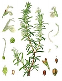 Rosemary - The practical magic of Working from the Feminine, where the mystical meets the structural, from economics to strategic planning.