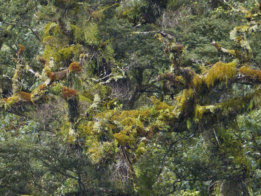 The texture of flowing grasslands. Mosses hanging from trees (Doubtful Sound, N.Z.)
