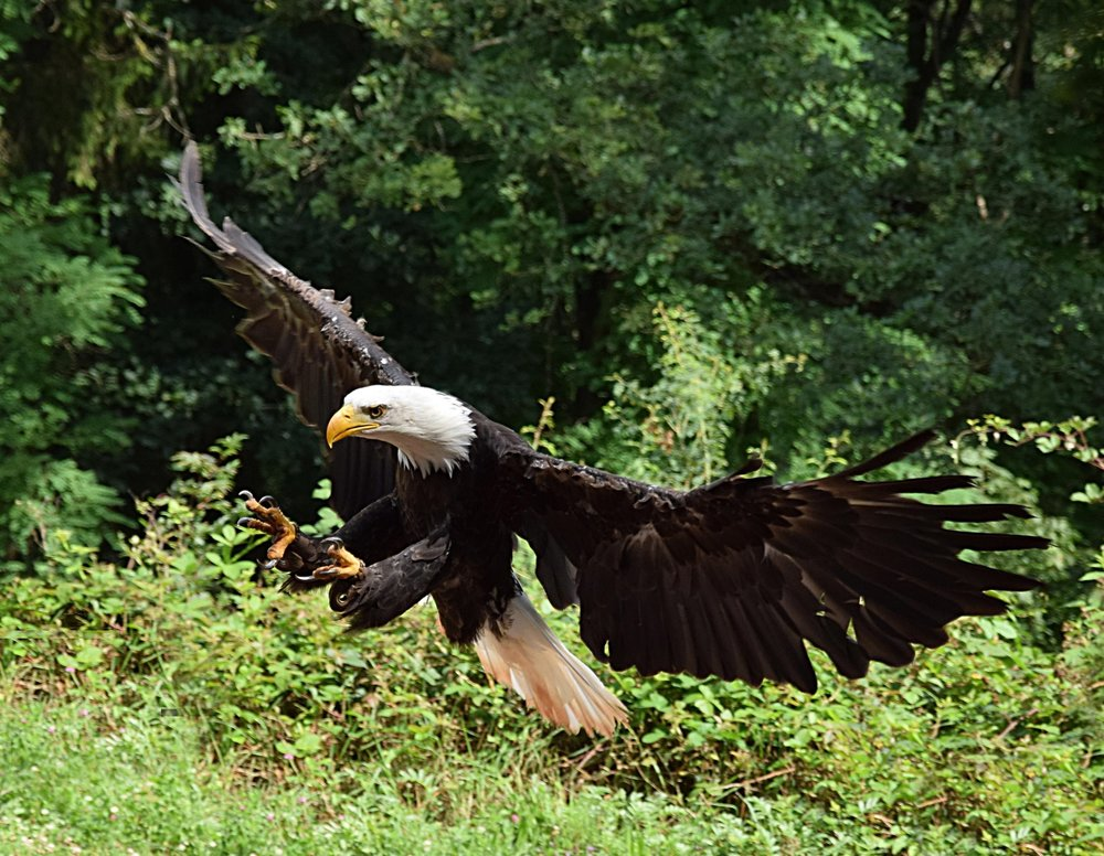 Eagle Picture.jpg