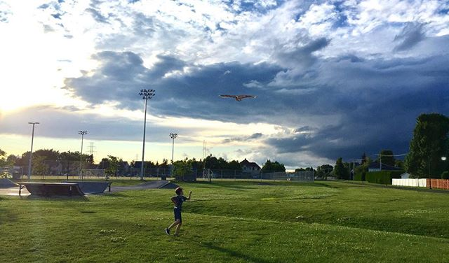 Kite in the park #vacation #photographer #lifestyle #canada #iphone6plus