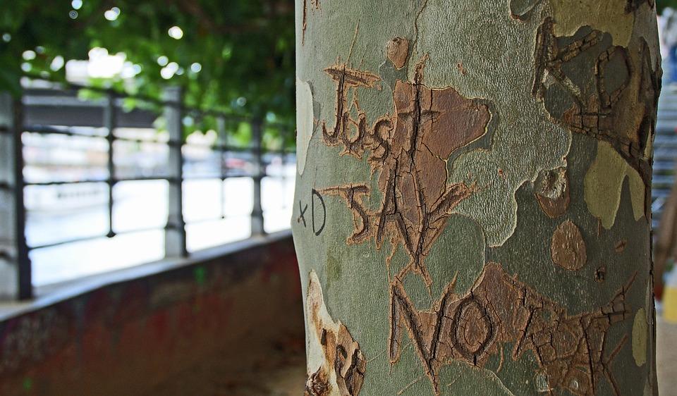 tree-bark-1209874_960_720.jpg