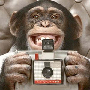 ian-fox-shutter-monkey-the-comedy-show-with-pictur-300 by .