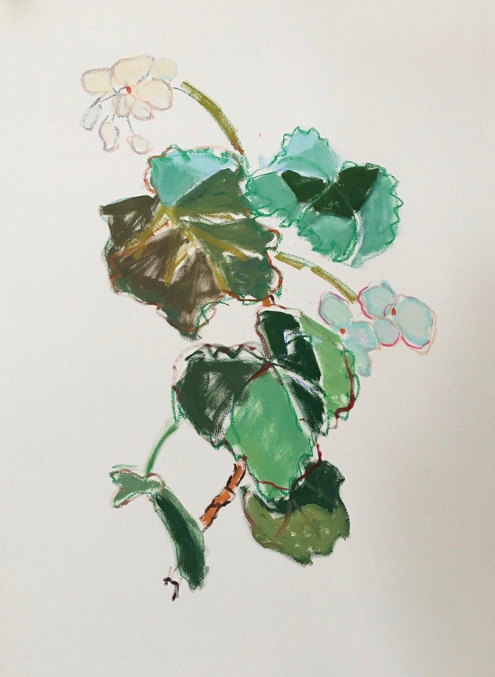 White Geranium, 30x23