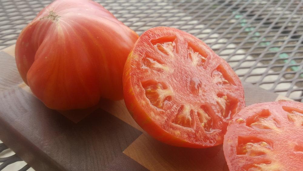 u tomatoes.jpg