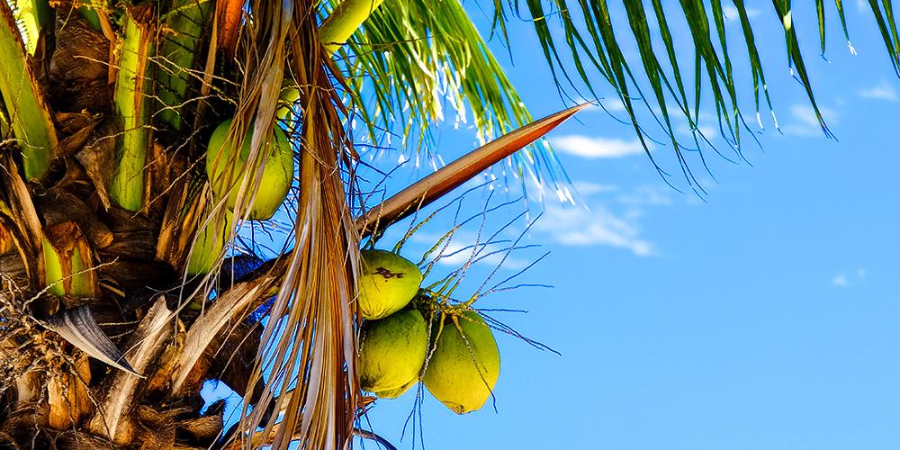 pexels.com_Coconut.jpg