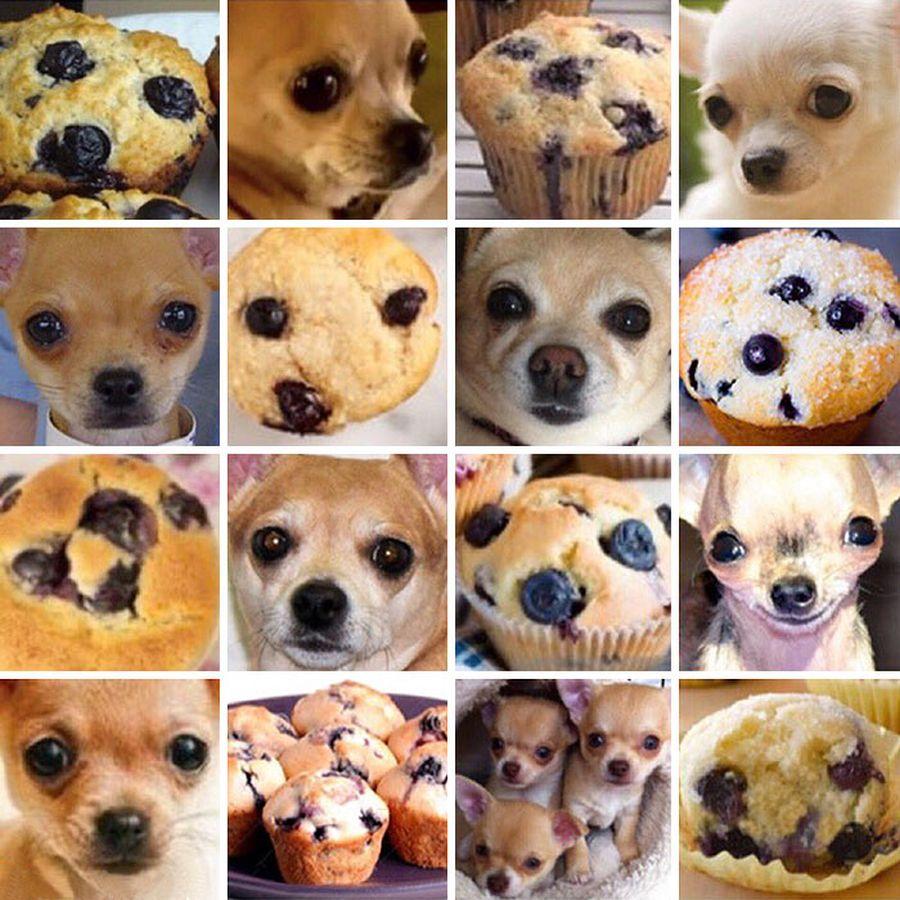 AI_Bryn_McA_PuppyMuffin.jpg