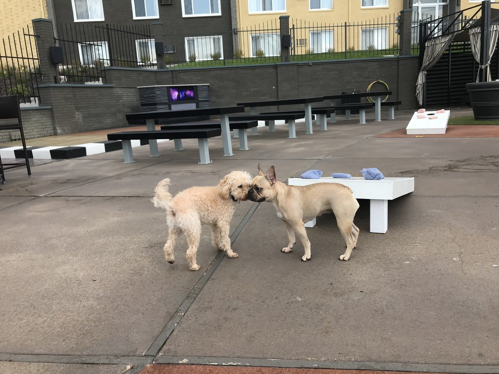 Dogs Making Friends