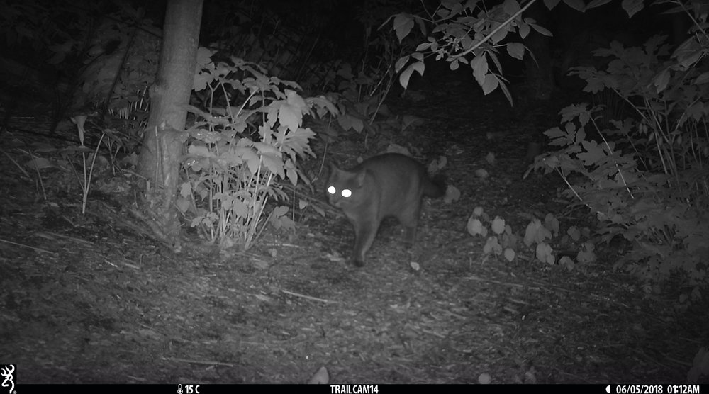 Cat 3 - Elizabeth Gow copy.jpg