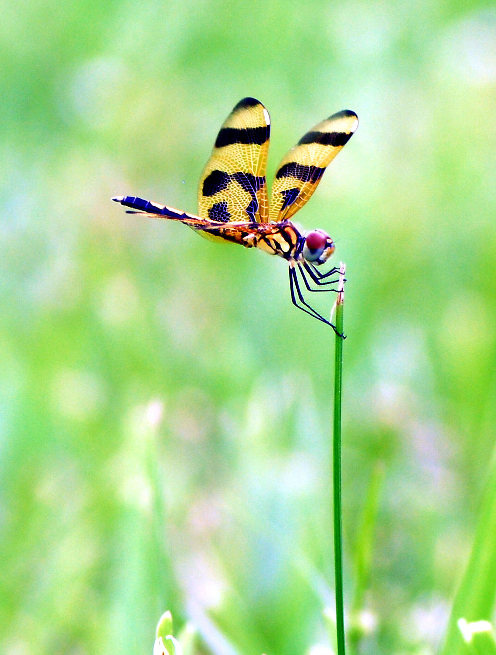 dragonfly6.jpg