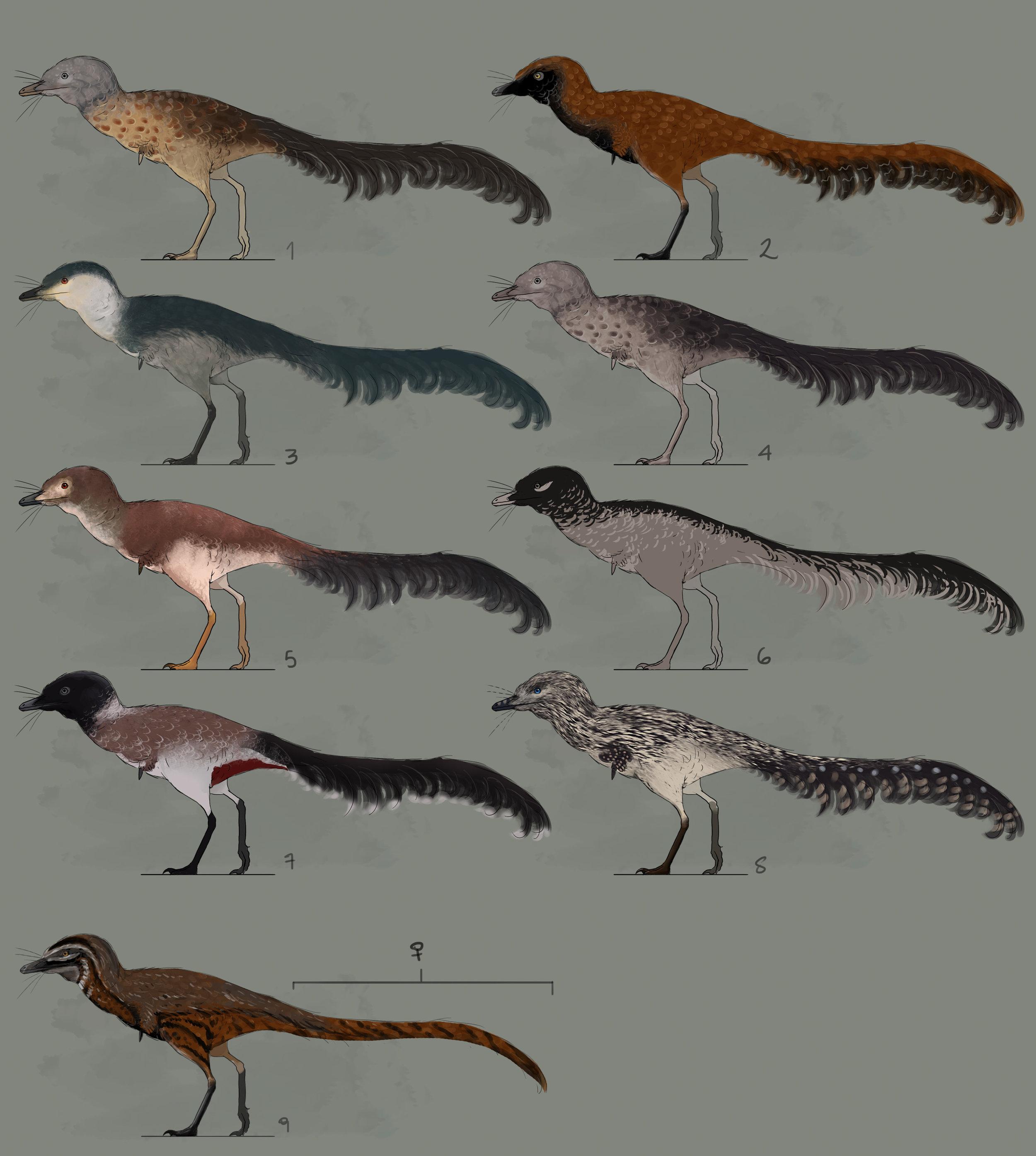 Alvarezsaurid design sheet by Chris Masna.
