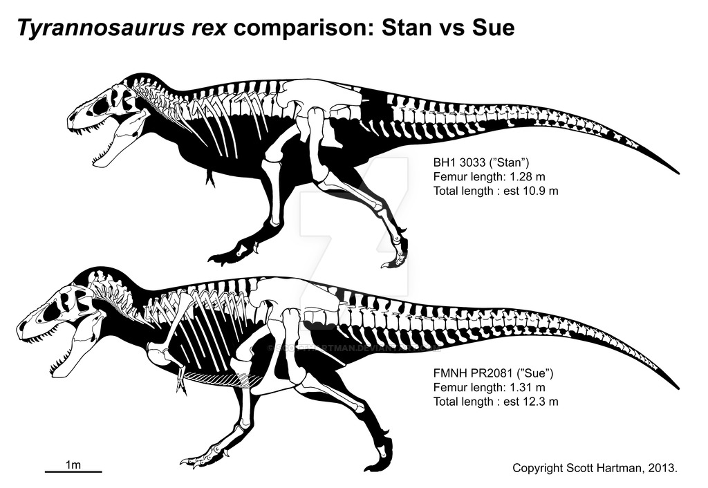 Redesigning a Tyrant: Meet the NEW Tyrannosaurus rex — Saurian