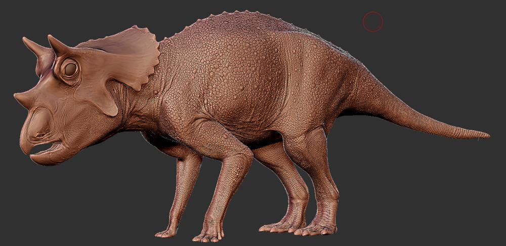 Triceratops  hatchling.