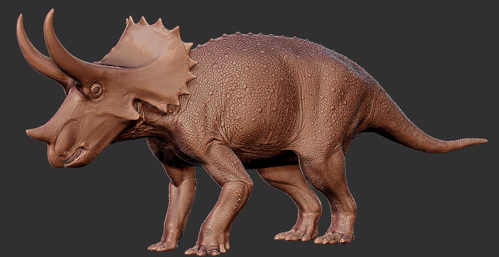 Triceratops  juvenile.