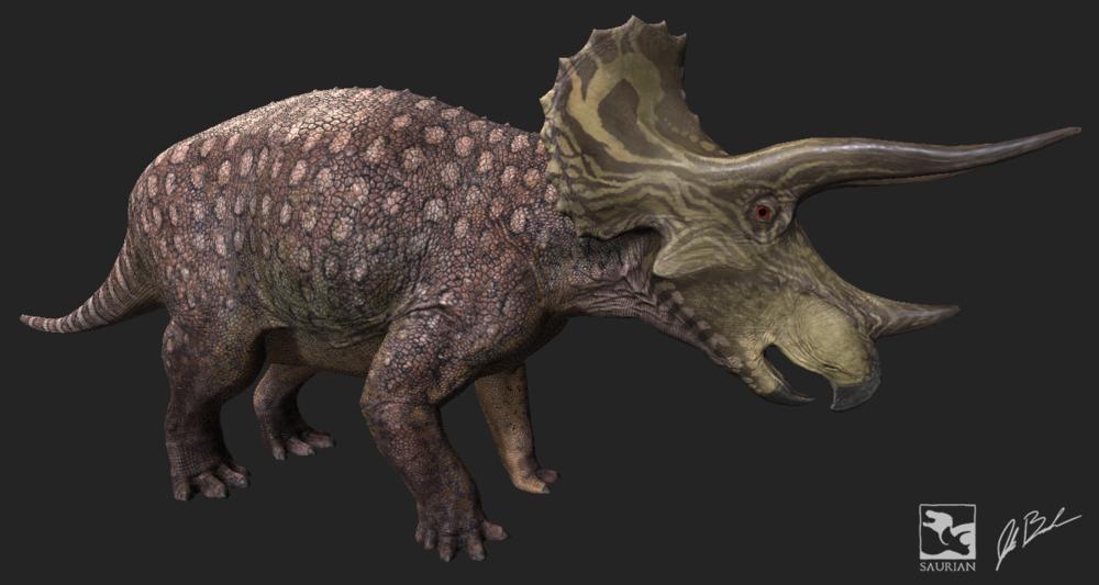 Subadult  Triceratops