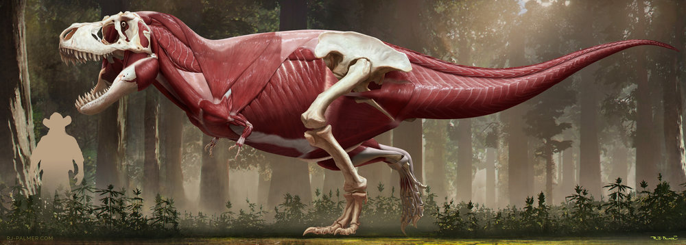 rjpalmer_tyrannosaurusrex_muscles_002.jpg
