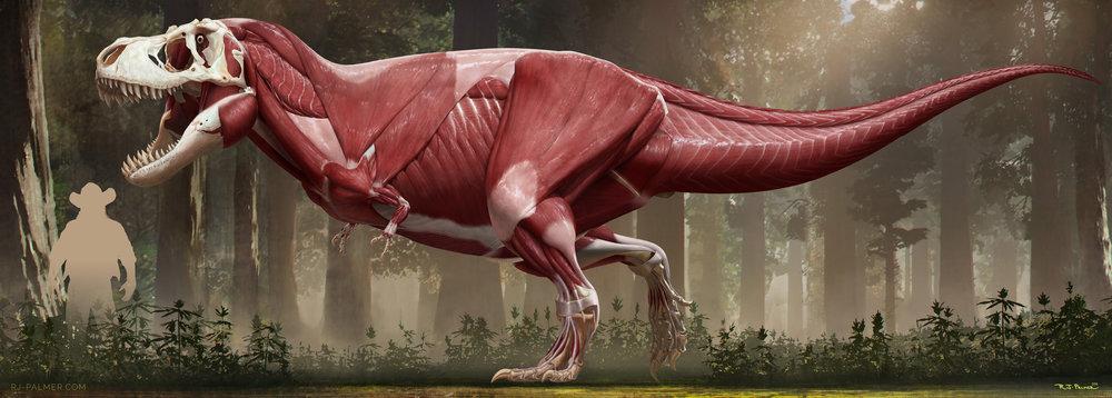 rjpalmer_tyrannosaurusrex_muscles_001.jpg