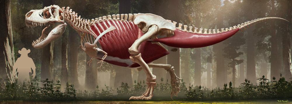 rjpalmer_tyrannosaurusrex_muscles_004.jpg